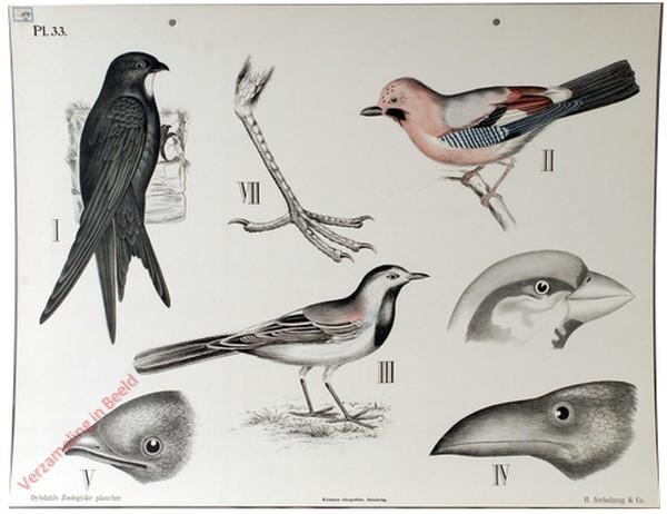 33 - Zangvogels