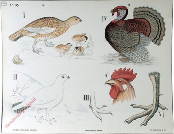35 - Krabvogels