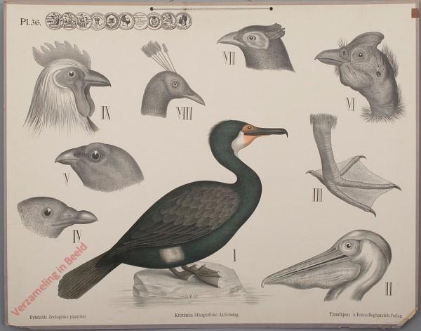 36 - Zwemvogels, a.