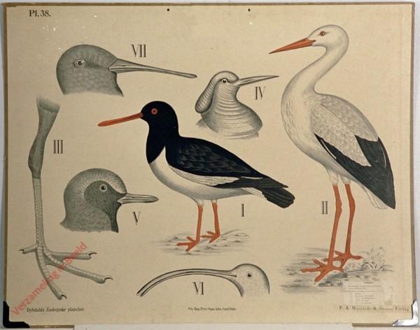 38 - Waadvogels
