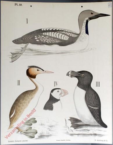 39 - Zwemvogels, b