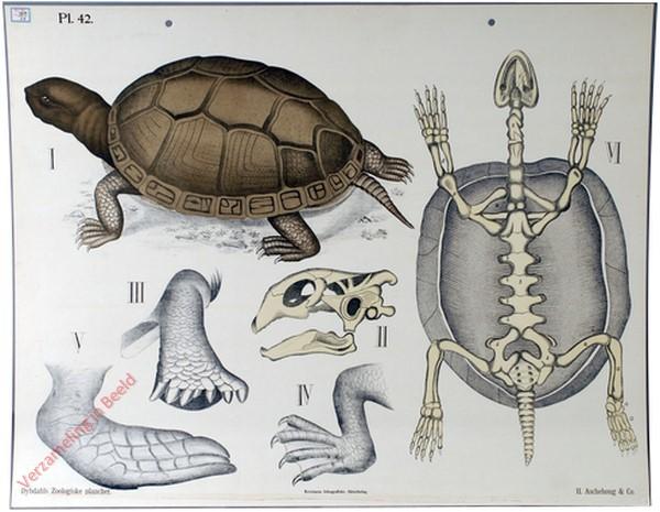 42 - Schildpadden