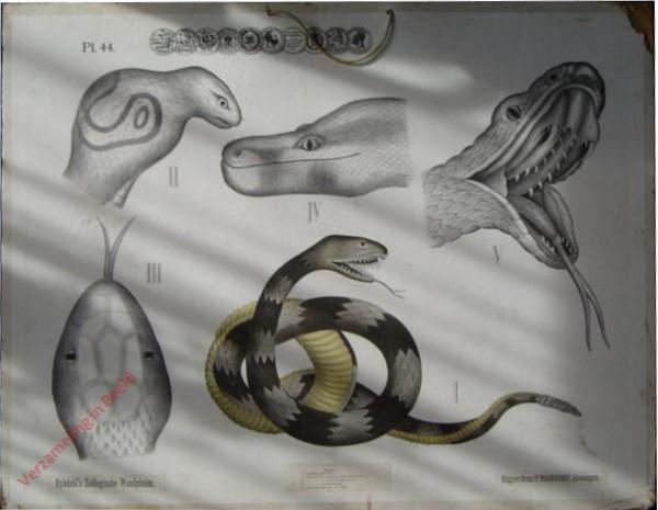 44 - Slangen