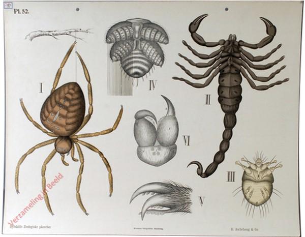 52 - Spinachtige dieren