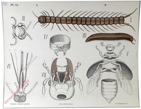 53 - Duizendpooten en Insecten in het algemeen