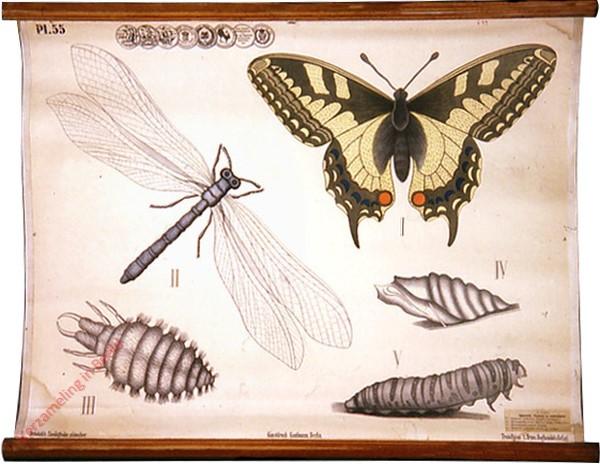55 - Insecten. b