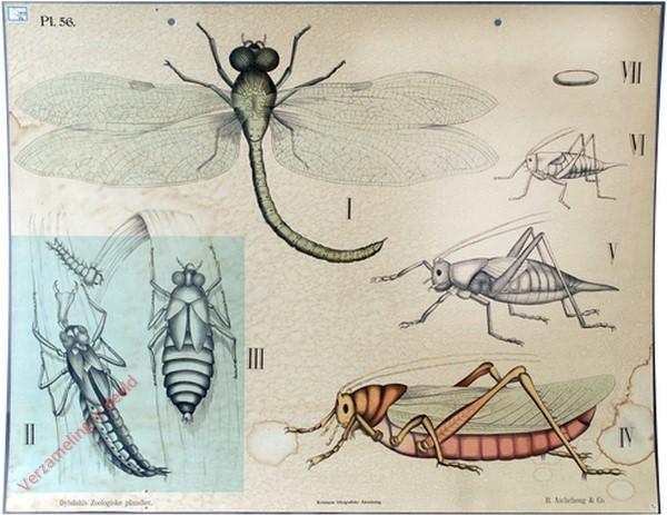 56 - Insecten. c