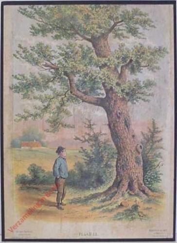 III - Jongen bij een boom