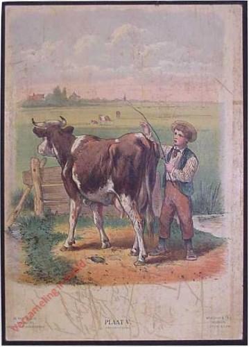 V - Herder met koe