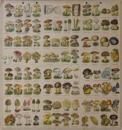 1 - Eetbare Soorten, met 95 Afbeeldingen