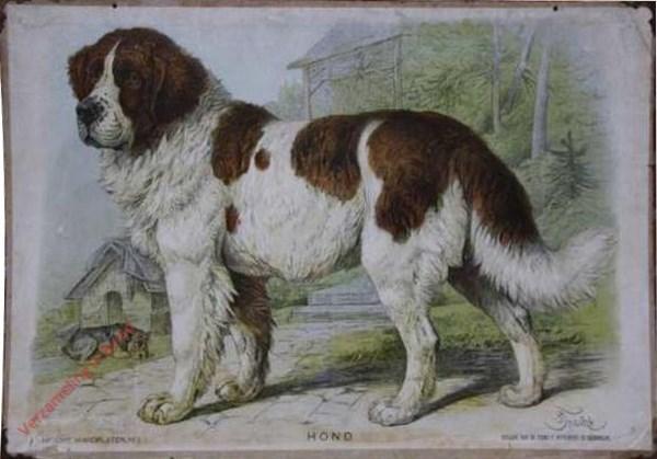 1 - Hond