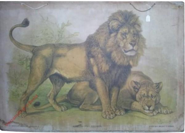 4 - Leeuw en Leeuwin