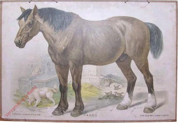 6 - Paard