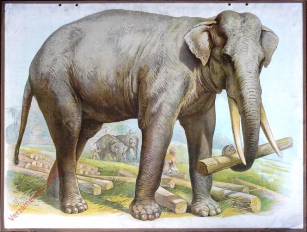 11 - Olifant