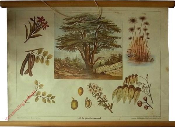 Serie 2 nr 5A - Uit de plantenwereld
