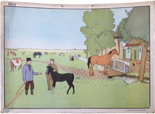 IIIa - [Paarden, koeien]