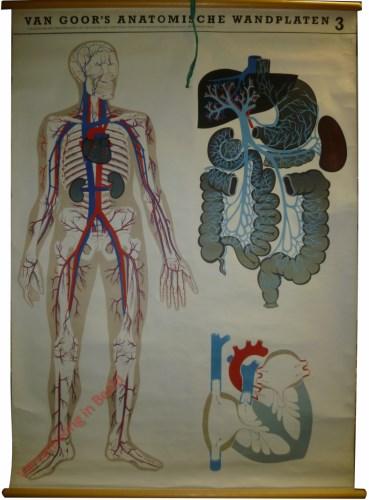 3 - Het bloedvatenstelsel