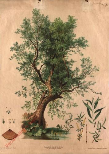 T. II - Weisse Weide