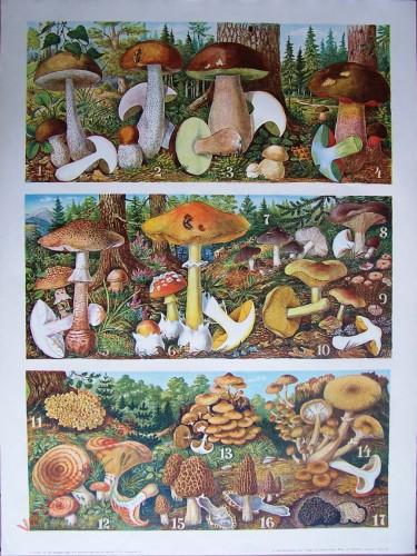 T. Va - [Pilzen 1-17]