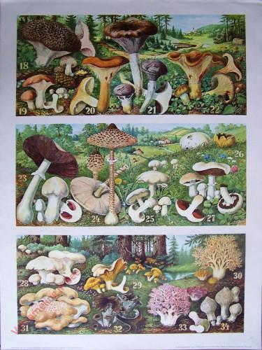 T. Vb - [Pilzen 18-34]