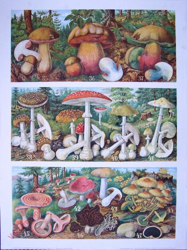 T. Vc - [Pilzen 35-47]