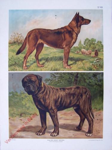 T. VII - Schäferhund, Bullenbeisser [herzien]
