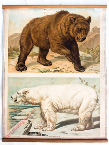 T. XII - Brauner Bär oder Gemeiner Landbär, Eis- oder Polarbär [herzien]