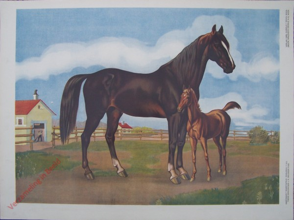 T. XIX - Pferd mit Fohlen [herzien]