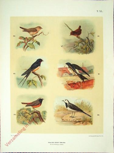 T. XL - Grasmücke, Zahnkönig, Gartenrotschwänzchen, Bachstelze, Rauchschwalbe, Hausschwalbe [herzien]