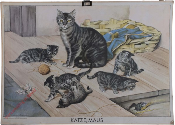 Katze, Maus