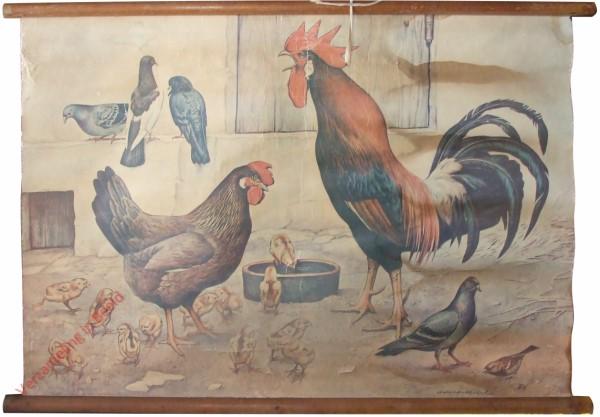 [Hühner]