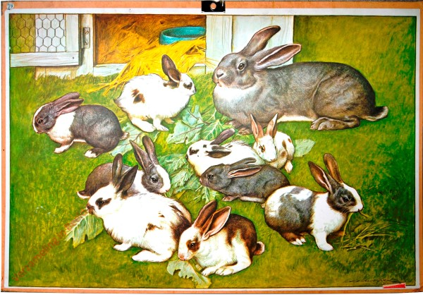 [Kaninchen]