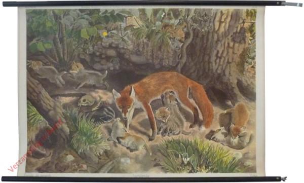 69 - Fuchsfamilie