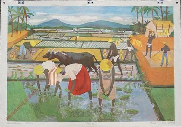 84 - Reisplantage
