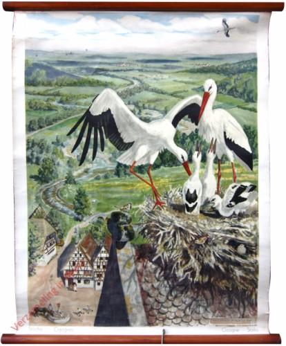 87 - Storche