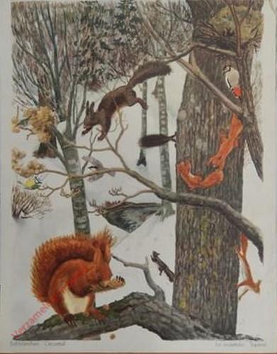 106 - Eichhörnchen