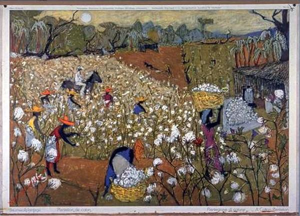 116 - Baumwollplantage