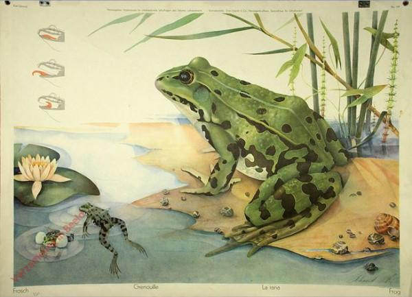 118 - Frosch