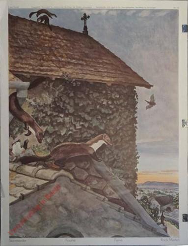 130 - Steinmarder