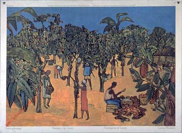 132 - Kakaoplantage