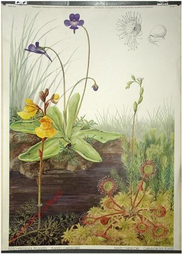 147 - Fleischfressende Pflanzen
