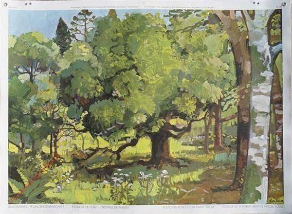 148 - Waldinneres