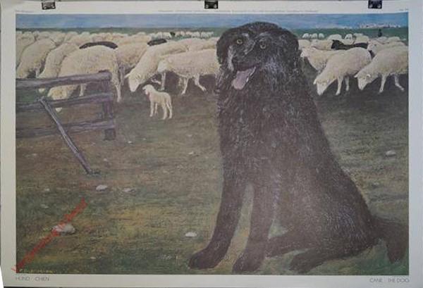169 - Hund