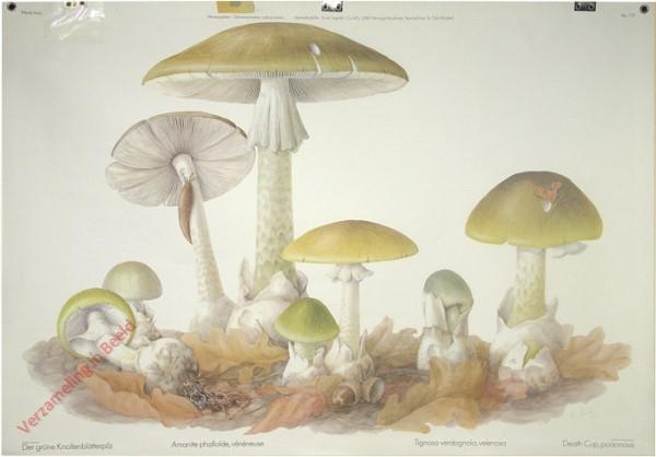175 - Der grüne Knollenblätterpilz
