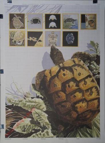 223 - Schildkröte