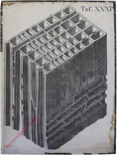 XXXIV - [onbekend]