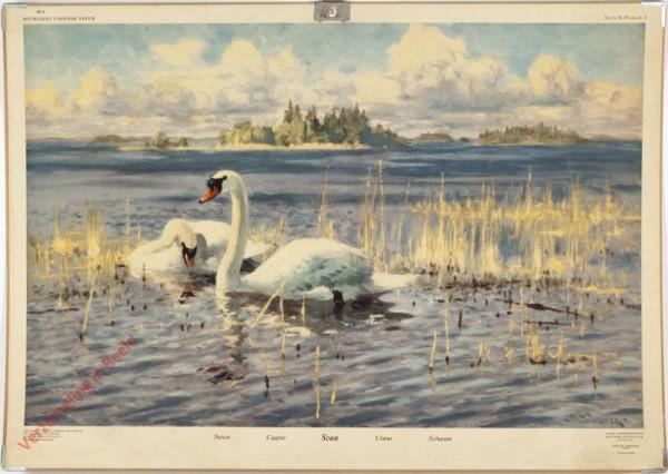 4 - Swan