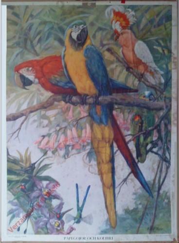 Papegojor och Kolibri