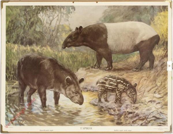 Tapirer