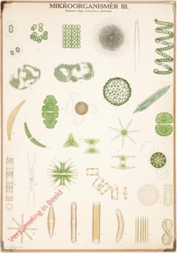 III - Blågröna alger (Cyanobakterier), Desmidieer, Kiselalger